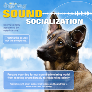 Angel Dog Sound Socialization v2019 Cover