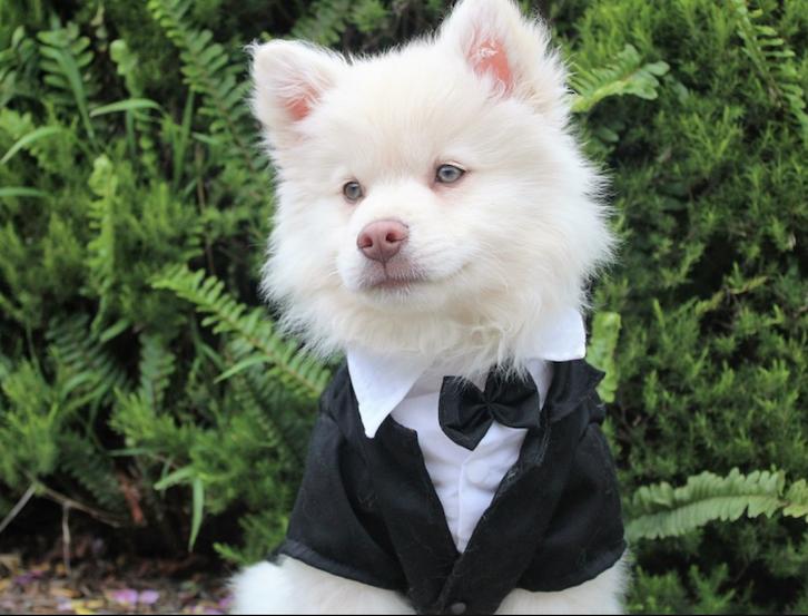 Wedding Event Pet Services