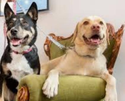 Angel Dog Program for the Dominant Canine