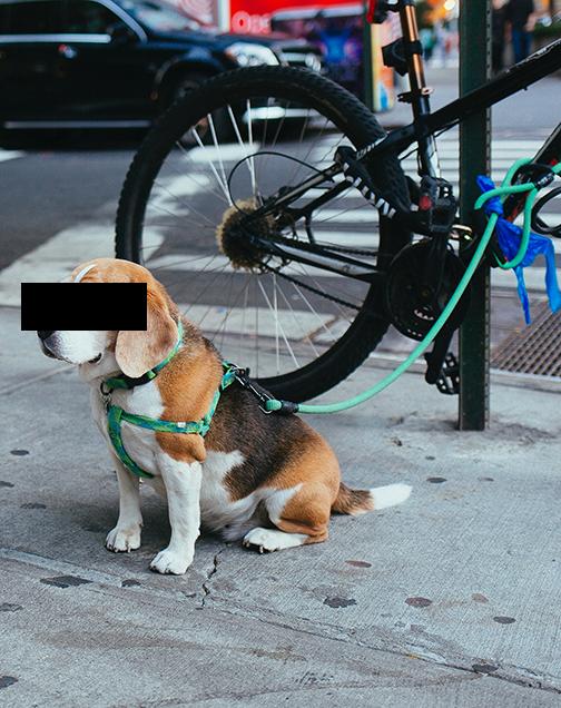 Doggy Don'ts
