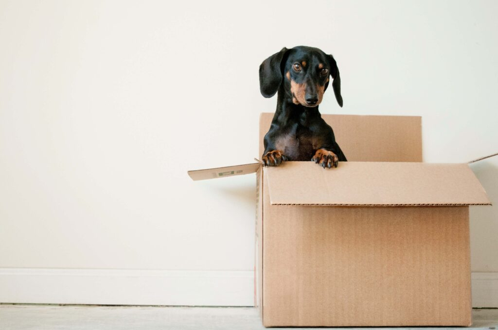 dog move