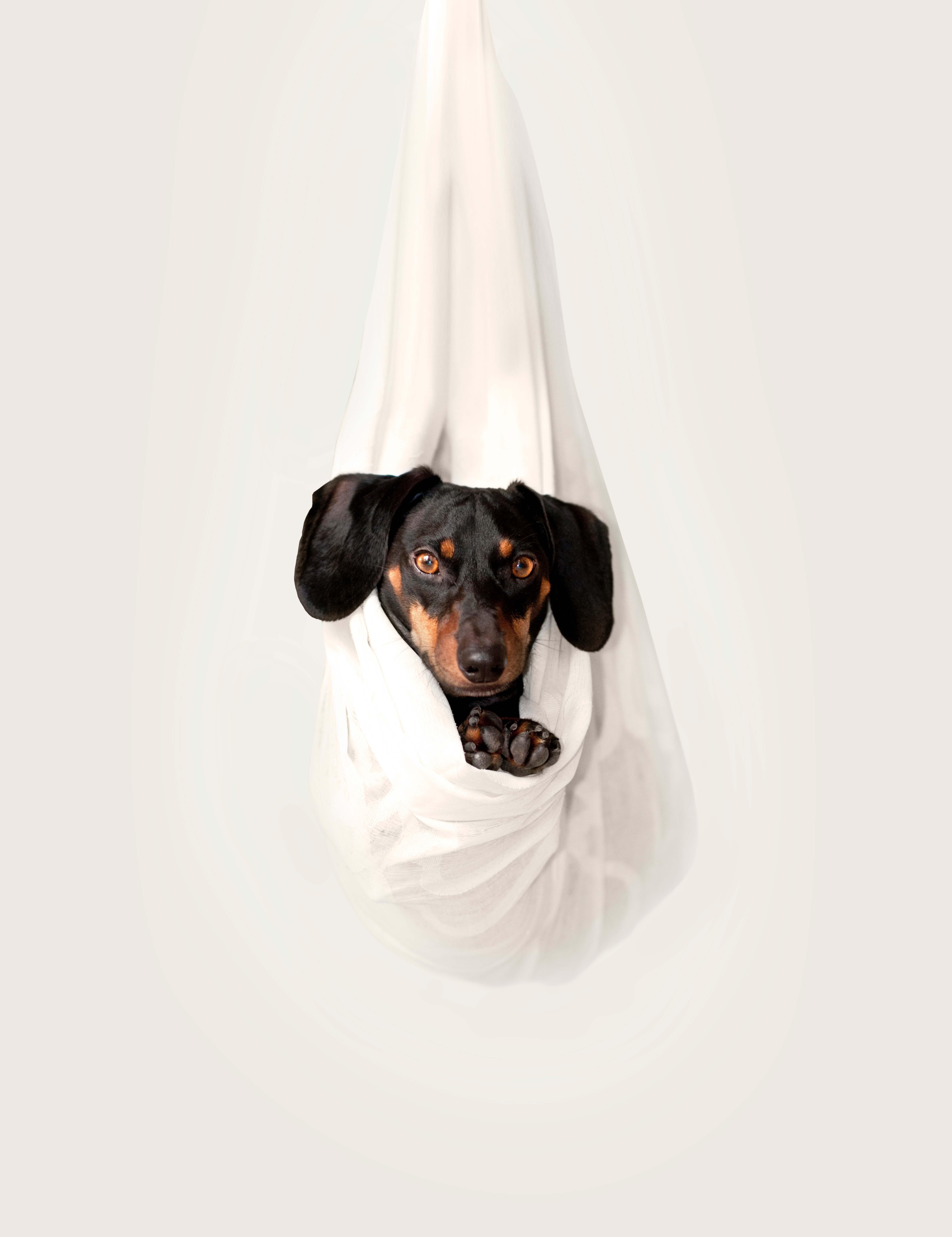 best puppy training